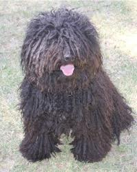 This is Isti the Puli, a movie dog from the animal talent agency Performing Animal Troupe. | As an animal actor Ernie the hound dog works on movies, television, commercials, photo shoots and other productions. | We have experienced studio dog trainers and wranglers.